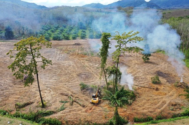 Logging and land clearing of rainforest for the palm oil industry has been widely condemned by environmental groups. Picture: Rich Carey/Getty