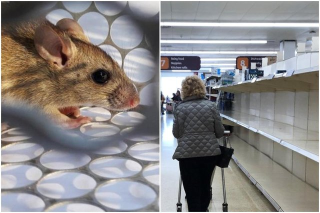 Brits warned hoarding food could attract rats