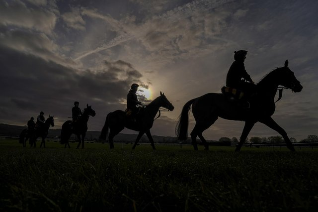 Horses exercise on the gallops at Cheltenham Racecourse ahead of the festival. Picture: Alan Crowhurst/Getty Images