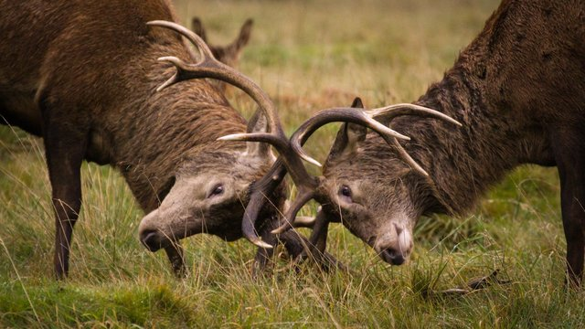 The British Association for Shooting and Conservation wants Scotland's political parties to establish a Scottish gamekeeping taskforce.