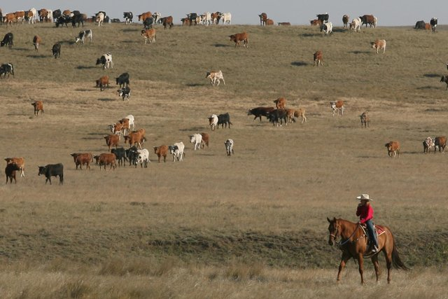 A cowgirl watches over livestock near Cheyenne, Wyoming. But the state isn't just plains, mountains and rivers, it is also developing a cryptocurrency sector (Picture: Michael Smith/The Wyoming Eagle/AP)