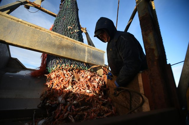 Proper management of the seas could enable fish populations to recover, allowing more to be caught, while protecting marine habitats and reducing carbon emissions (Picture: Andy Buchanan/AFP via Getty Images)