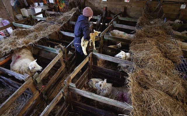 The new rules have big implications for existing tenant farmers