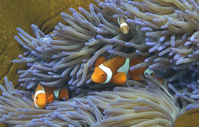 Fish swimming through the coral on Australia's Great Barrier Reef. Picture: William West/AFP via Getty Images