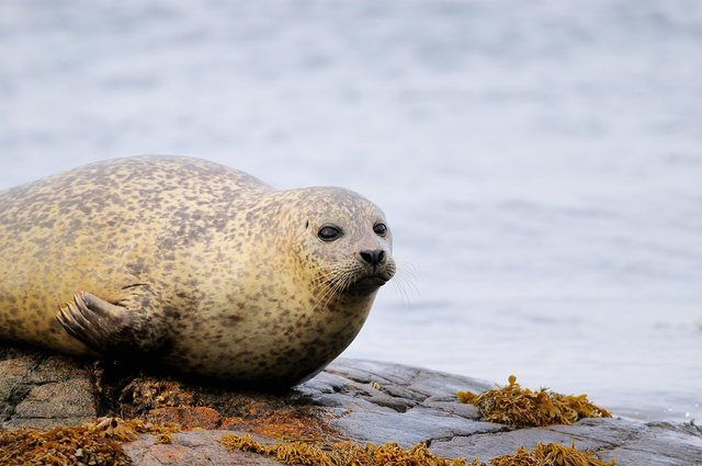 Watersport visitors to Loch Fleet in the Highlands are being warned to keep their distance from seals after a series of recent incidents.