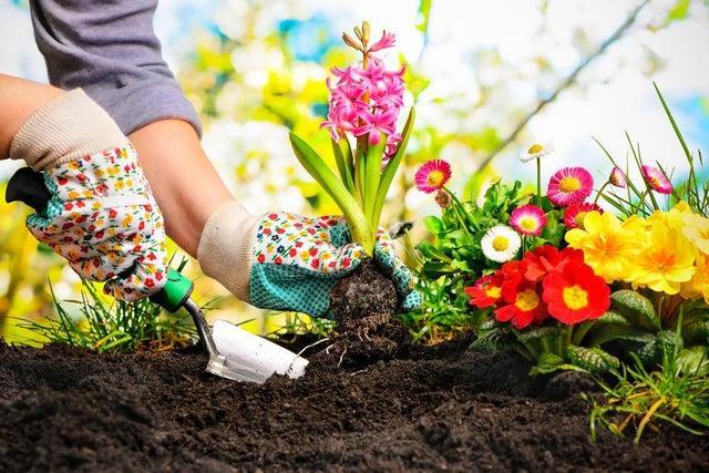 Gardening has become popular during lockdown.