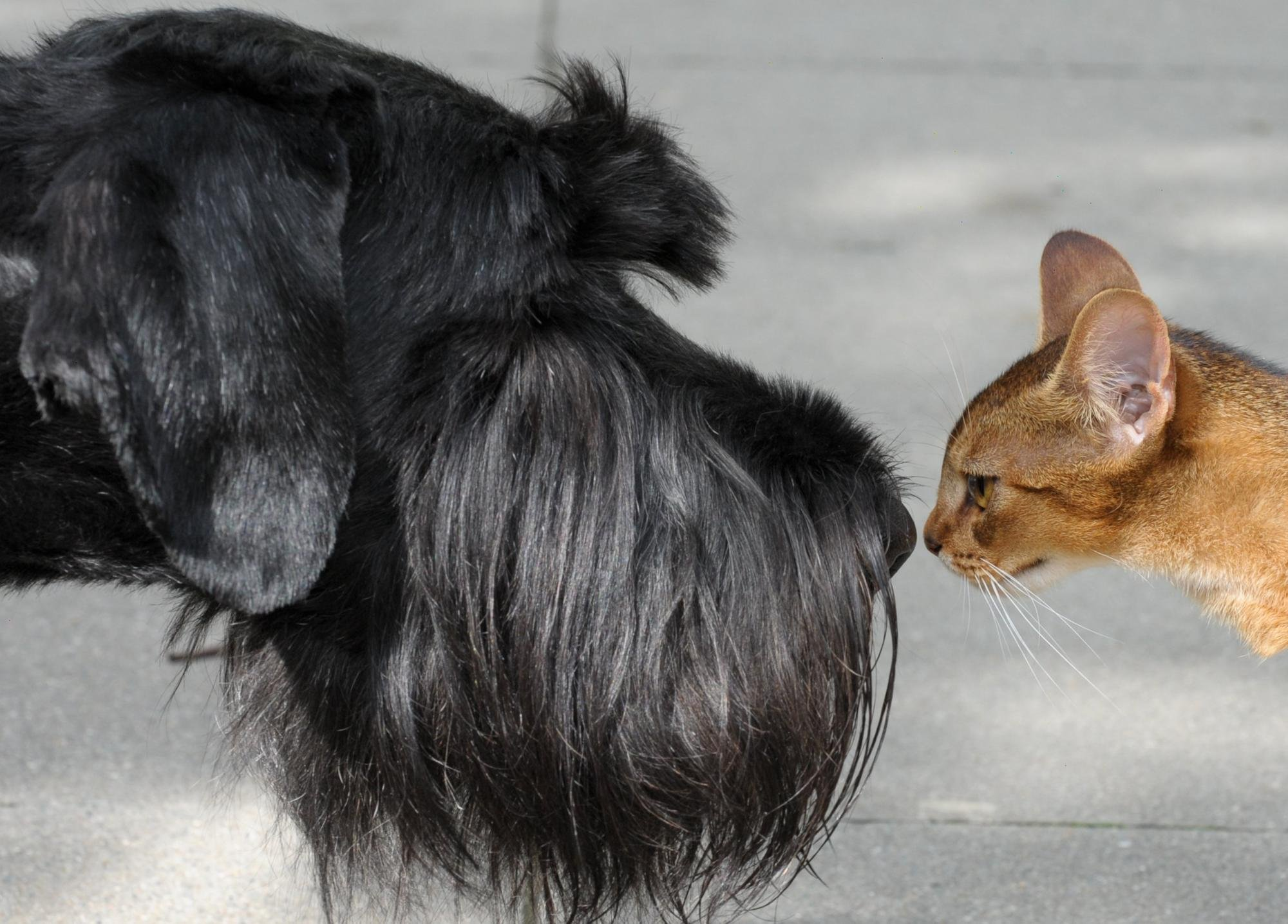 Post-Covid new normal: Why humans should 'be more dog' (and cat) to find the path to true wealth –Susan Murray