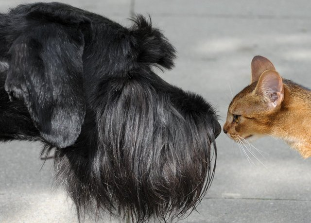 The phrase 'it's a dog-eat-dog world' is a corruption of an old Latin that 'a dog does not eat a dog' and curiosity doesn't have to kill the cat (Picture: Peter Endig/DPA/AFP via Getty Images)