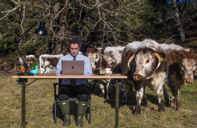 Photo of Stephen Nasrat of the Finderne Development Trust at work in a field of cows in rural Moray, Scotland. Residents have been complaining about poor internet speed in their community picture: PA/Coran Gleed