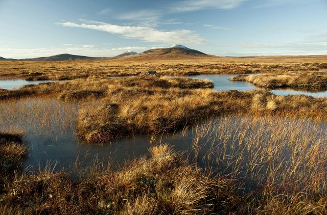 Scotland's Flow Country, which stretches across Caithness and Sutherland, is Europe's largest blanket bog and is considered critical in the fight against climate change