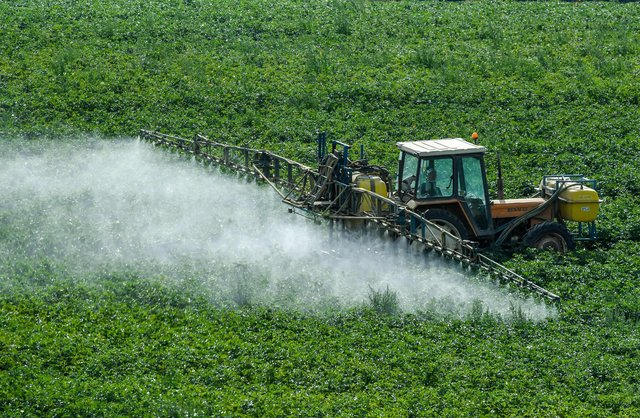 The elmination of fungicides is the ultimate goal of new research (Picture: Getty)