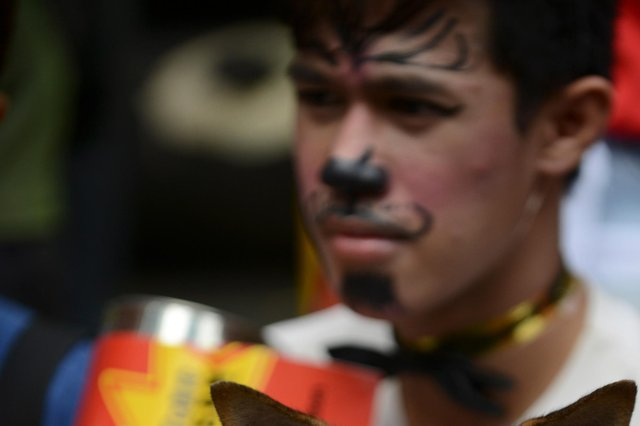 An animal rights advocate in a Manila protest against fireworks (Picture: Getty)