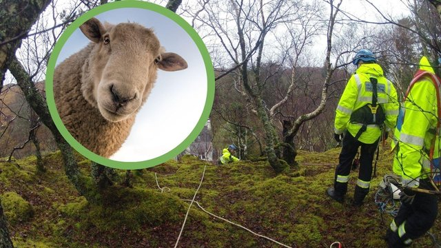 The sheep had been stuckup a cliff at Samalaman House in Glenuig for four days before the Mallaig Coastguard Rescue Team came to its rescue yesterday (Photo: Pixabay/ Mallaig Coastguard Rescue Team).