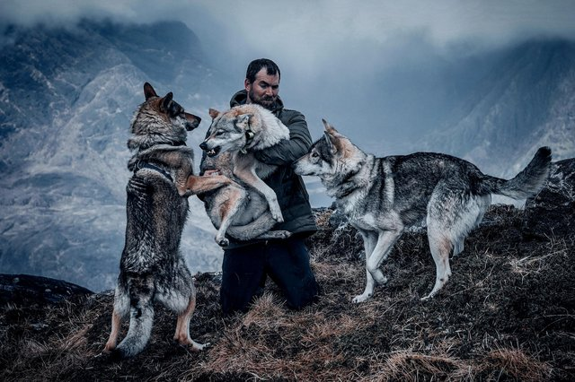 Oli Barrington brought his four wolfdogs and three others belonging to a friend to the Isle of Skye recently - here he helps Bella with some unwanted attention from a couple of the males