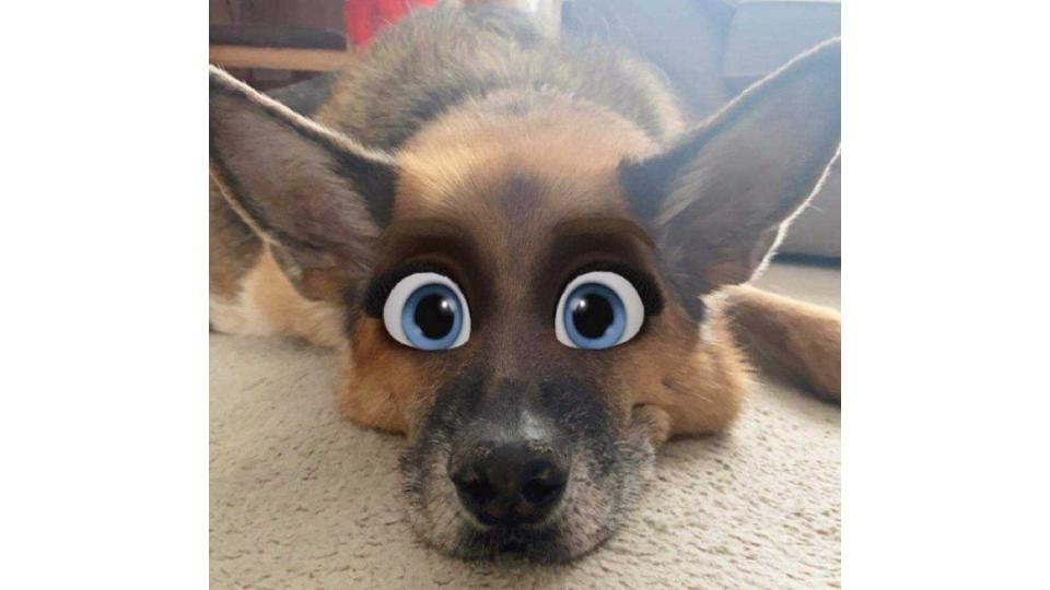 Cartoon Face Filter This Is How You Can Make Your Dog Or Cat Look Like A Disney Character Using New Snapchat Filter The Scotsman