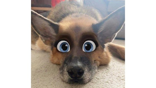 The new Snapchat filter turns pets into a character you'd find in an animated Disney movie (Photo: Gemma Smith/JPI Media)