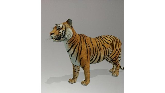 The tiger was crowned champion as the people's favourite 3D animal on Google (Photo: JPIMedia)